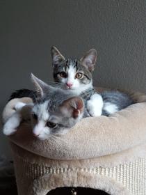 Ziva und Finn